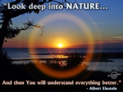Nature #4